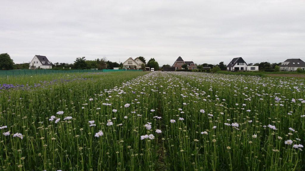 summerflowers-hoogeveen-2