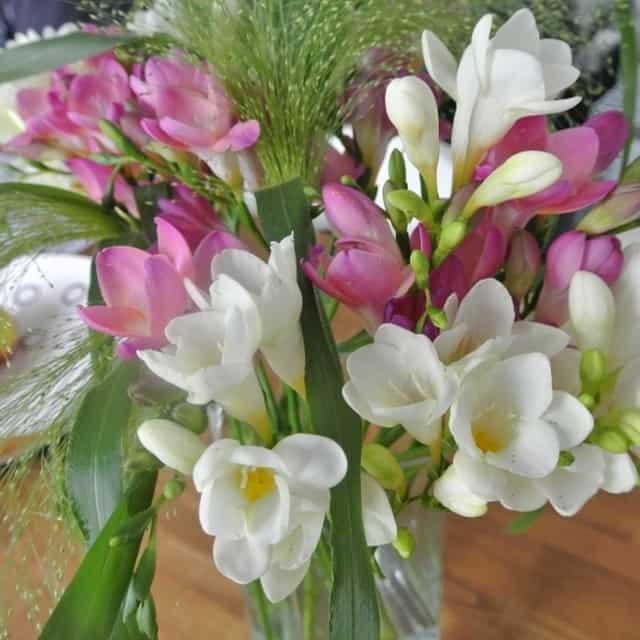 summerflowers-soorten-Freesia
