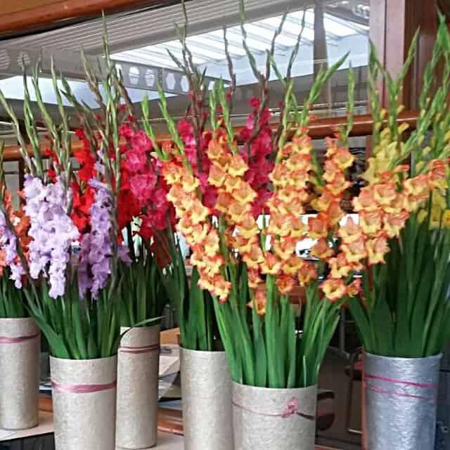 summerflowers-soorten-Gladiolus