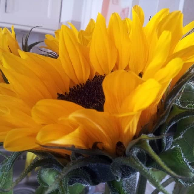 summerflowers-soorten-Helianthus