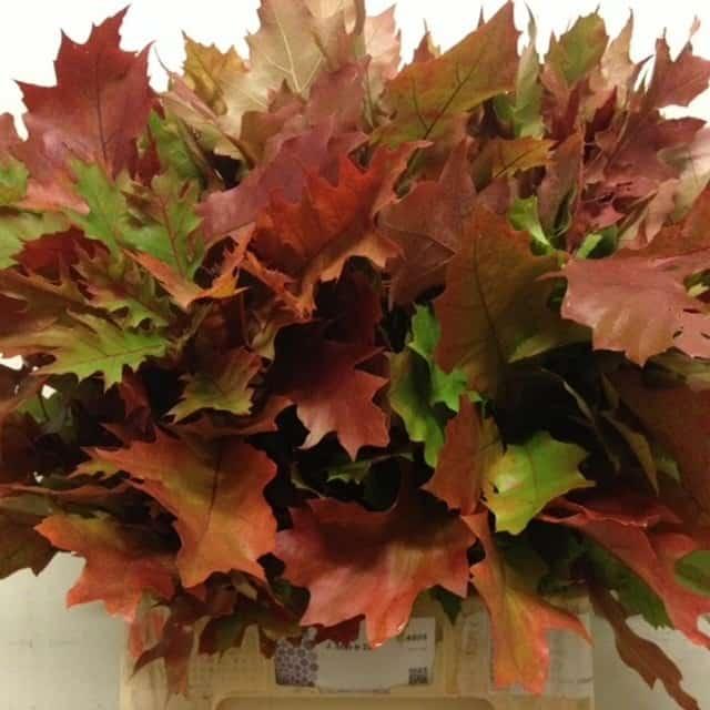 summerflowers-soorten-Quercus