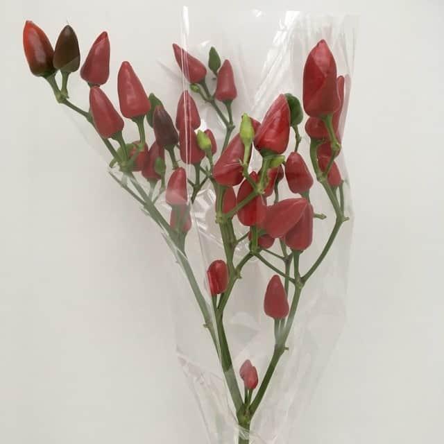 summerflowers-soorten-Sierpepers