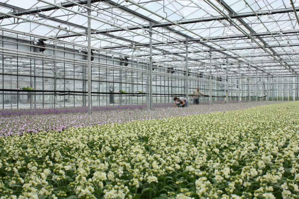 summerflowers-bosdijk-2