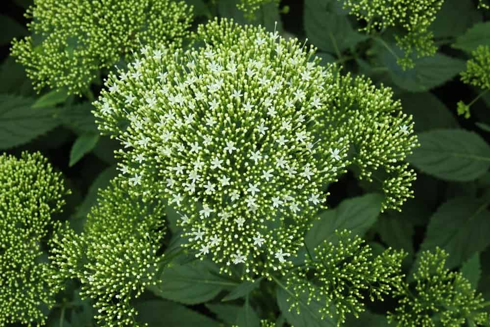 summerflowers-bosdijk-6