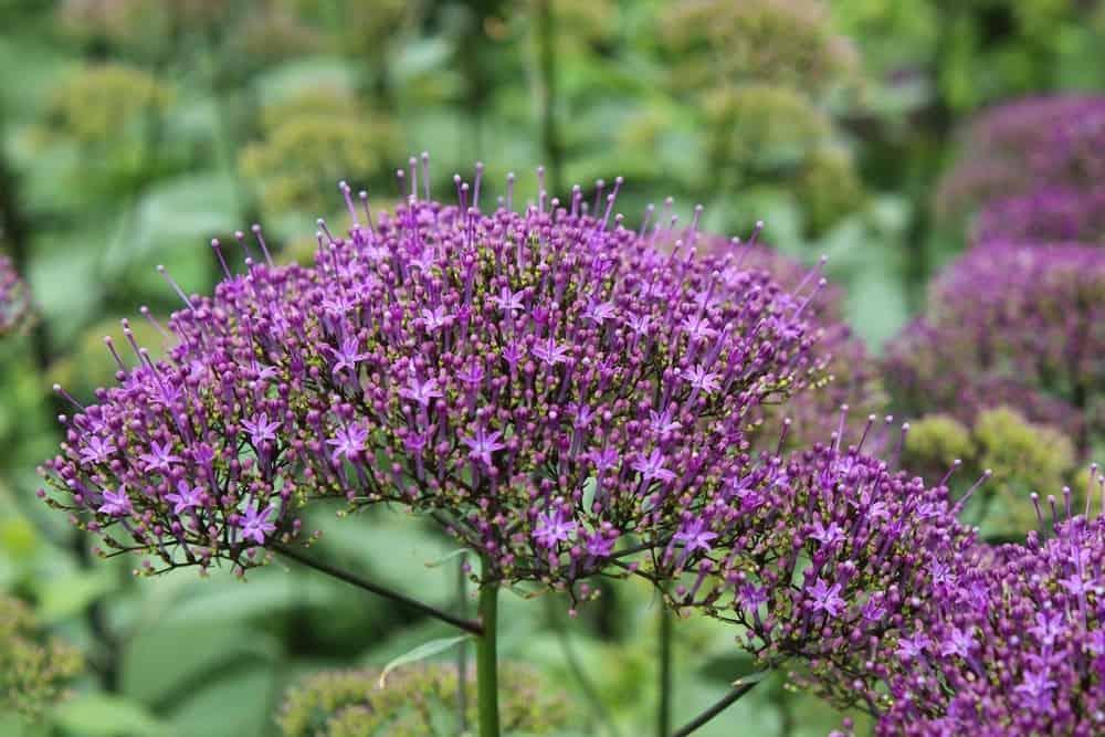 summerflowers-bosdijk-7