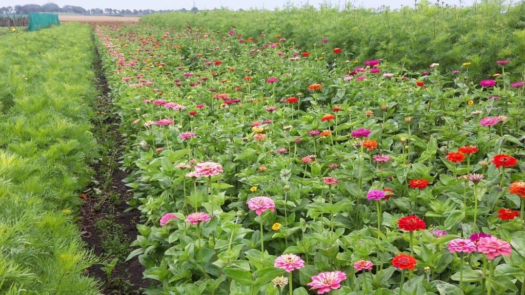 summerflowers_op-beemster-klei-01