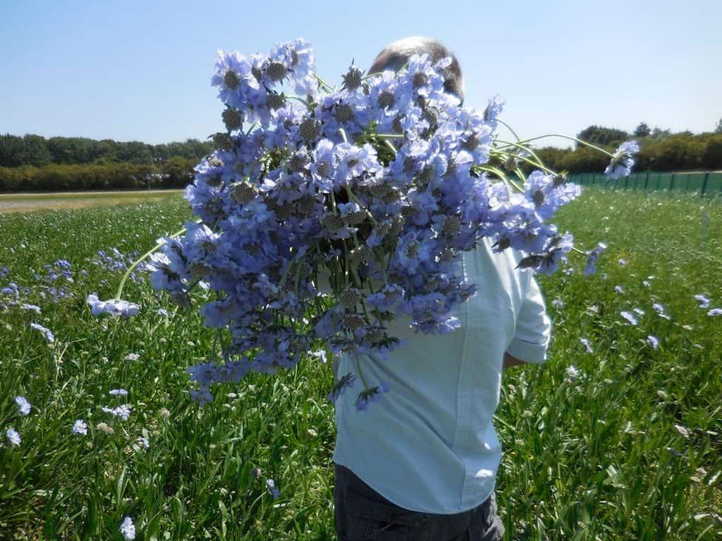 summerflowers-hoogeveen-1