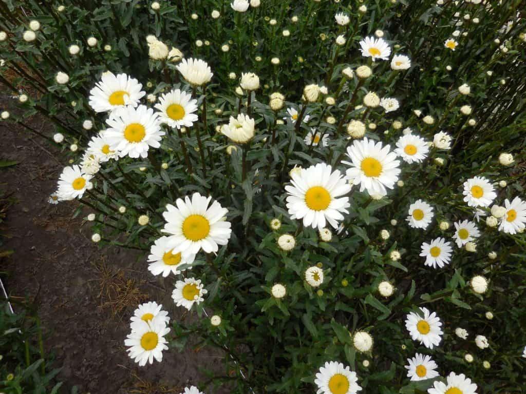 summerflowers-hoogeveen-3