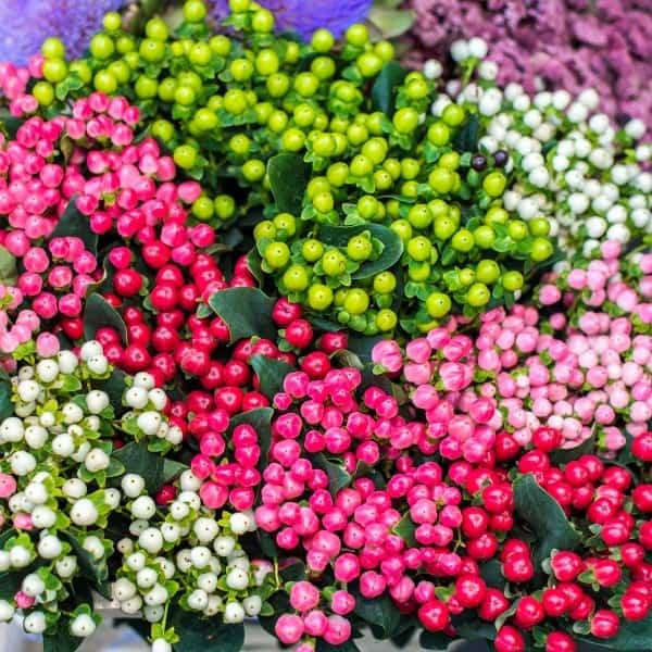 Summerflowers_Soorten_Hypericum