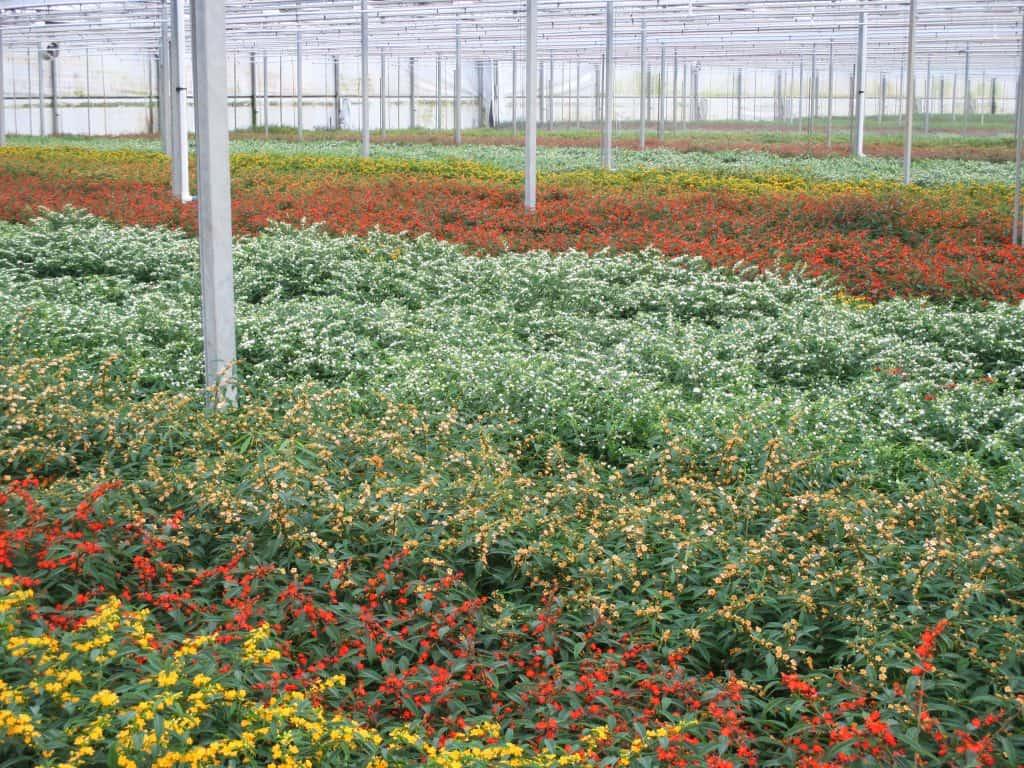 Summerflowers_Lex-van-Santen-01
