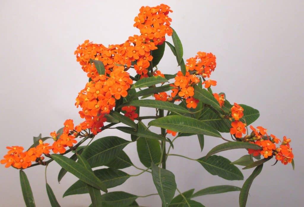 Summerflowers_Lex-van-Santen-03