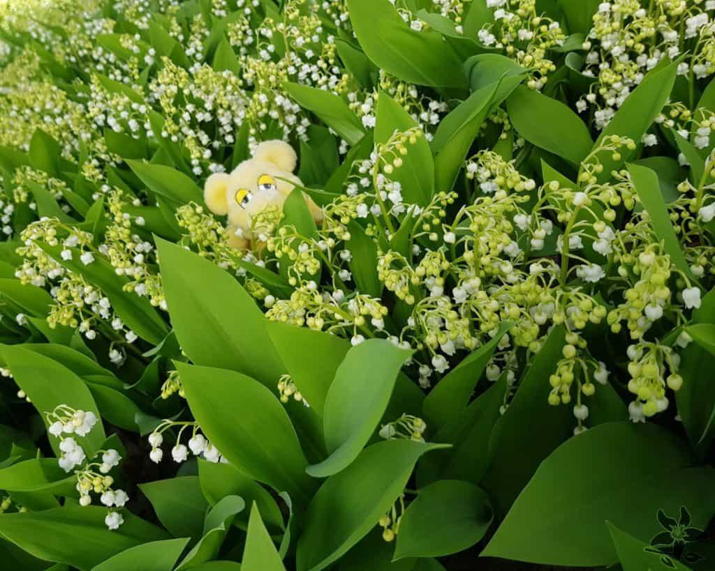 Summerflowers_kweker_Bakker_Convallaria_2020