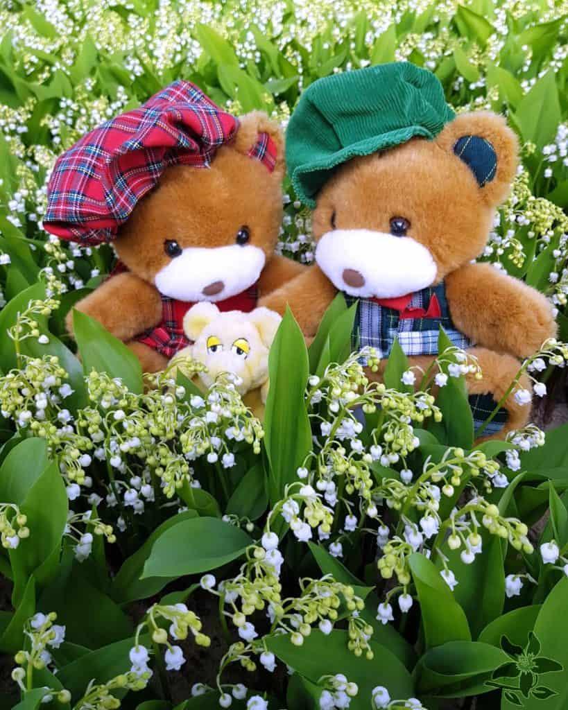 Summerflowers_kweker_bakker_lelietjeterdalen2_2020